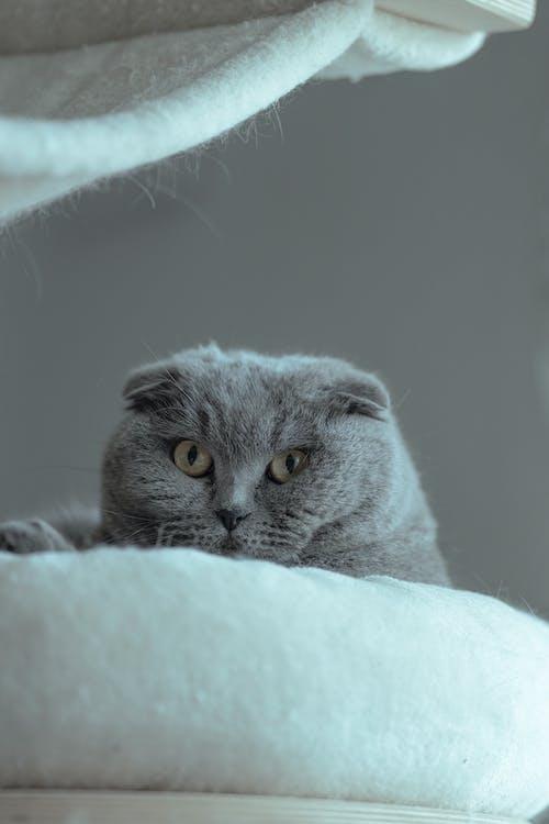 Imagine de stoc gratuită din adorabil, amuzant, animal