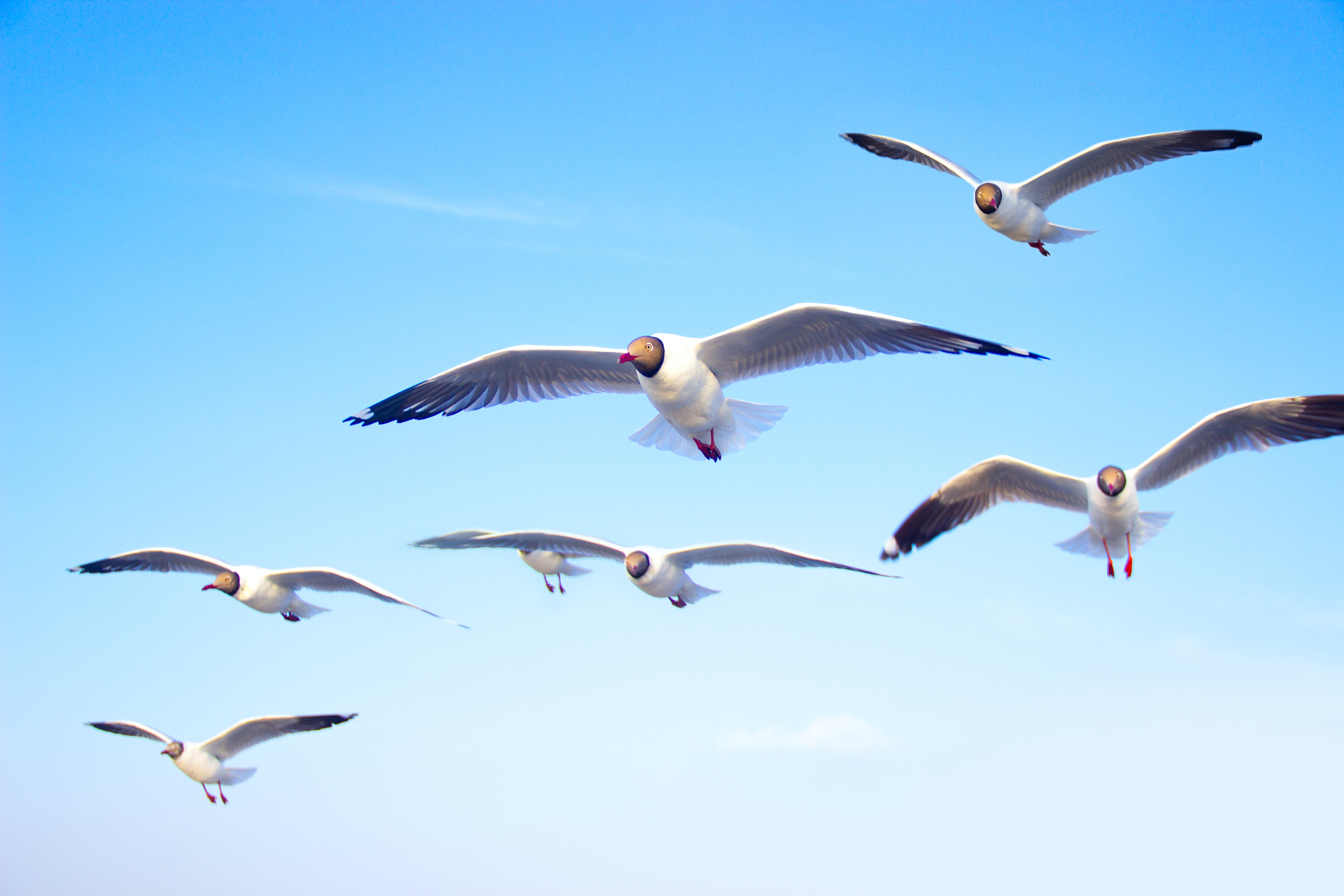 Základová fotografie zdarma na téma fotografování zvířat, létání, modrá obloha, obloha