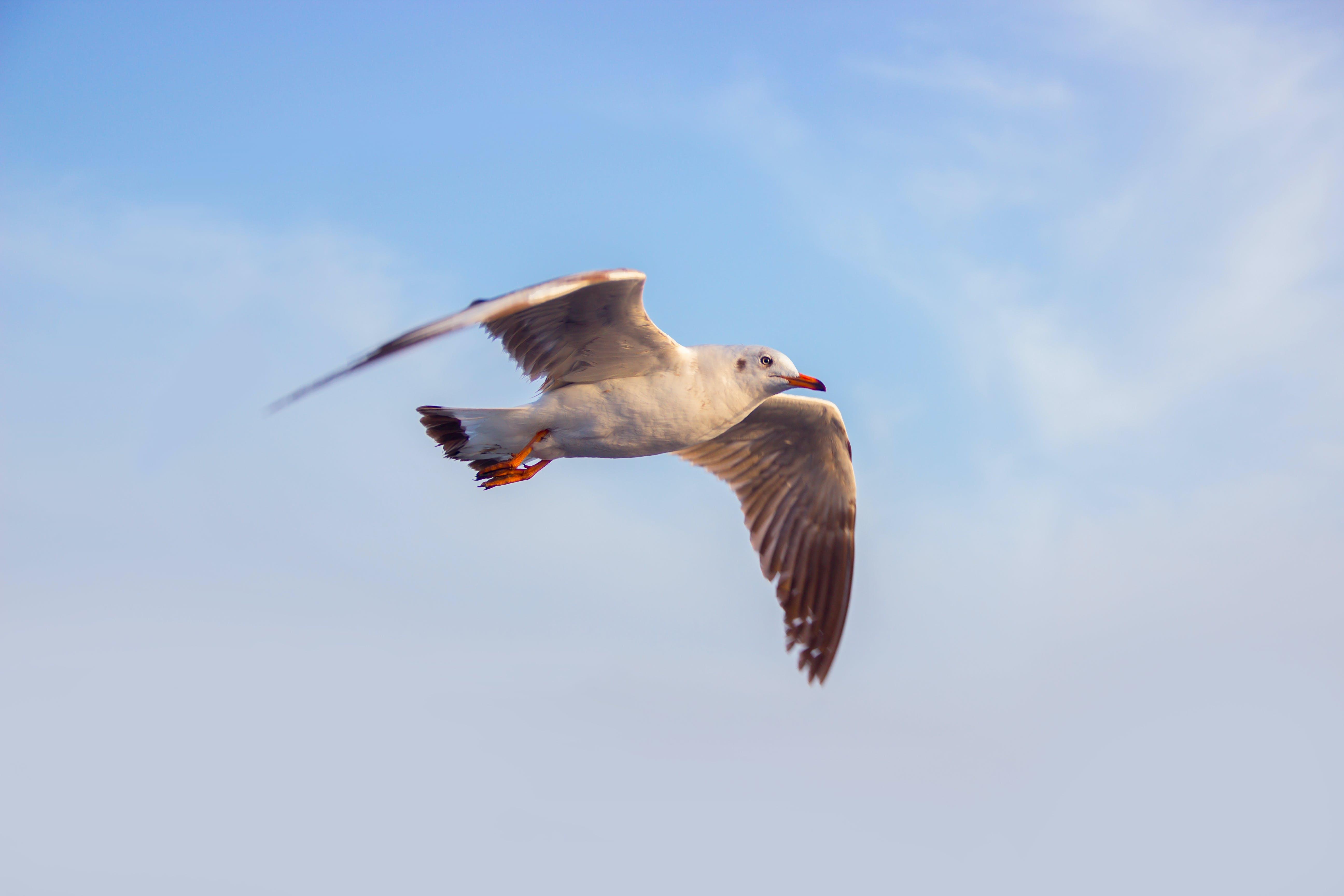 Photo of White Seagull Flying Under Blue Sky