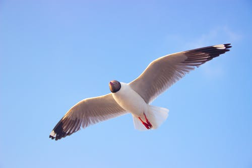 Close-Up Photography of a Flying Bird