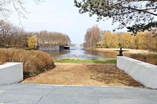 계단, 나무, 녹색, 도시 공원의 무료 스톡 사진