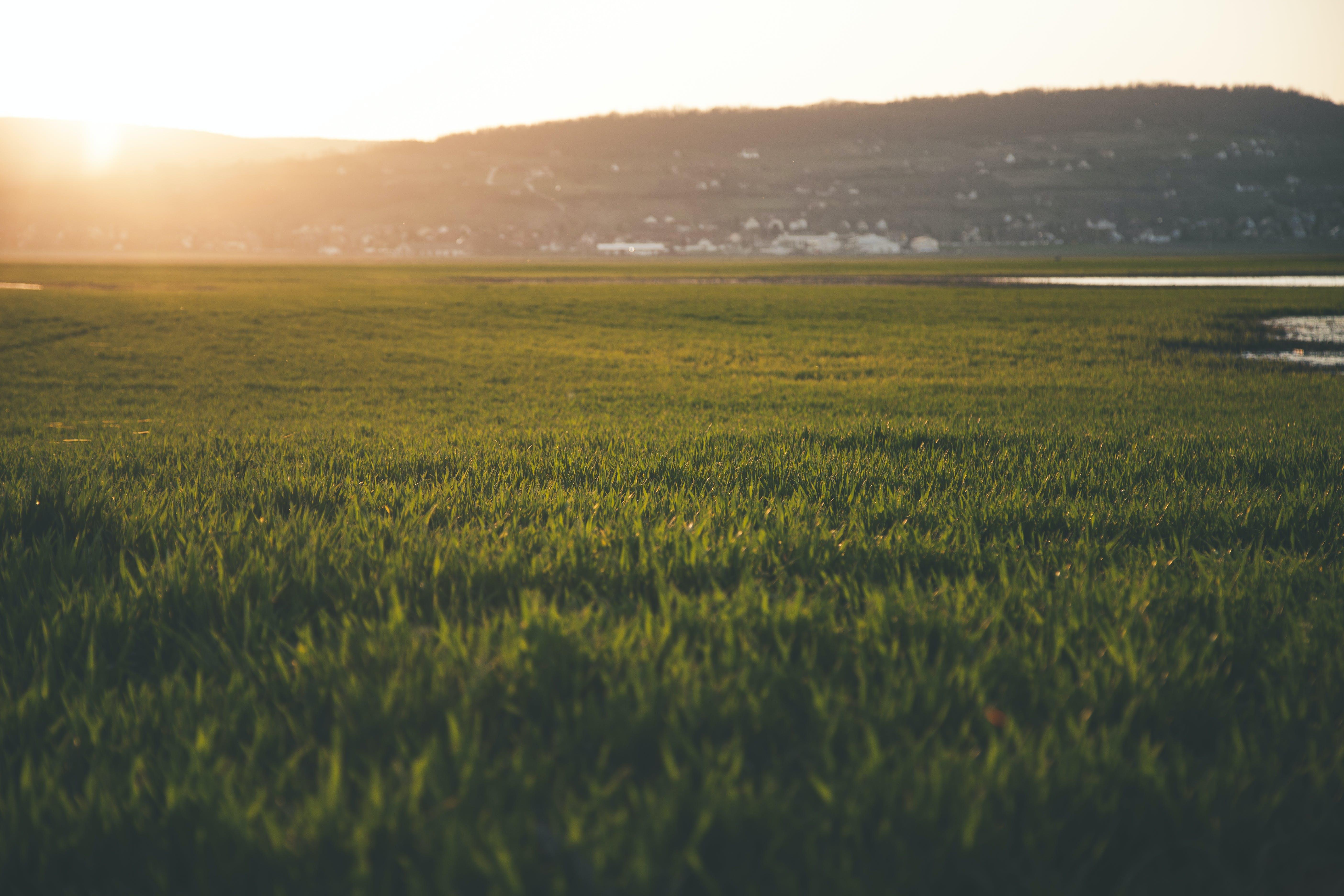 Green Grass Field during Sun Rise