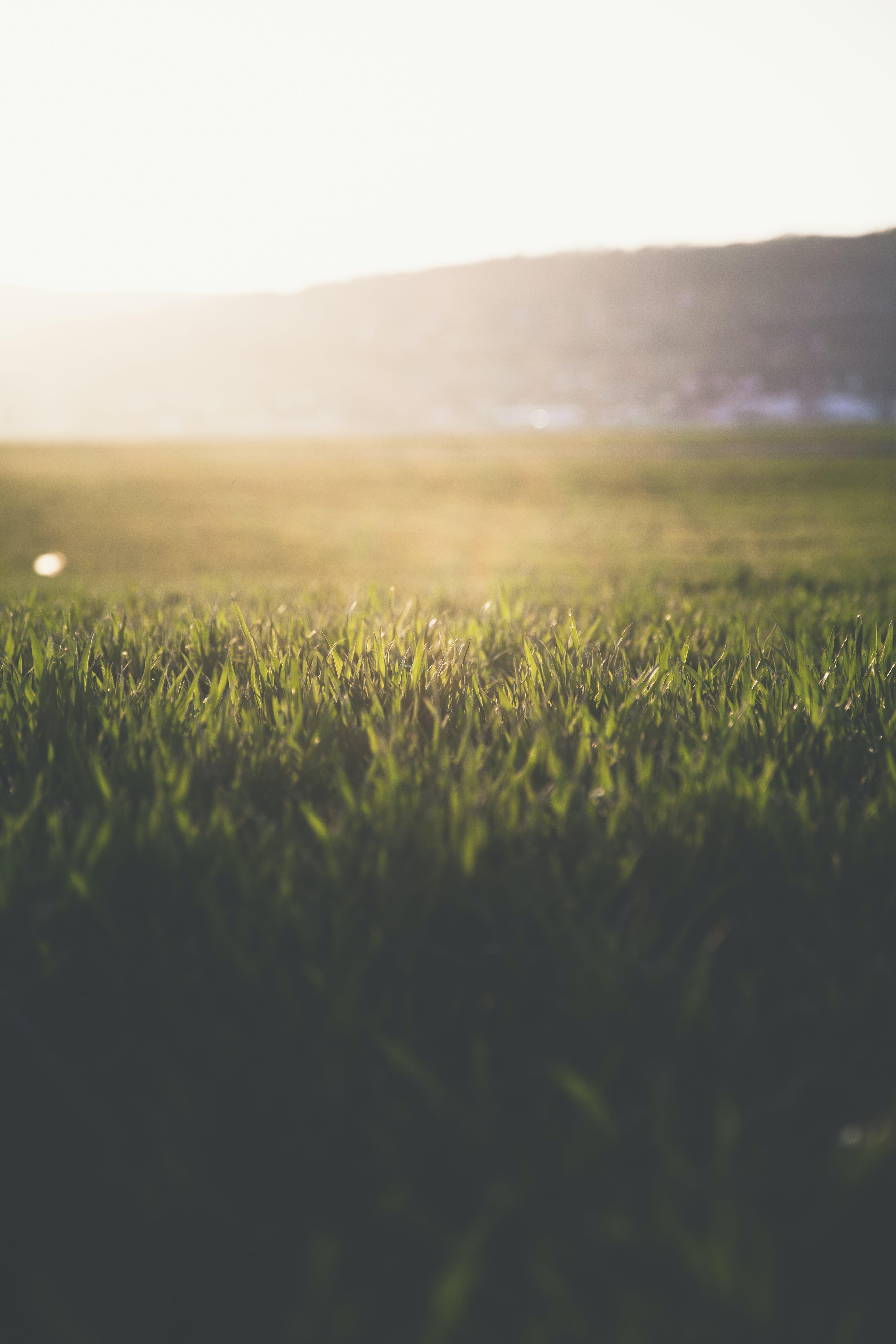 Gratis arkivbilde med åker, gress, gressfelt, gressmark