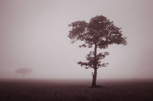 Fotos de stock gratuitas de amanecer, árbol, césped