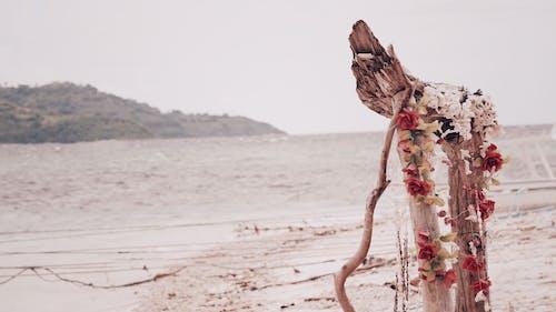 Imagine de stoc gratuită din faleză, flori artificiale, lombok