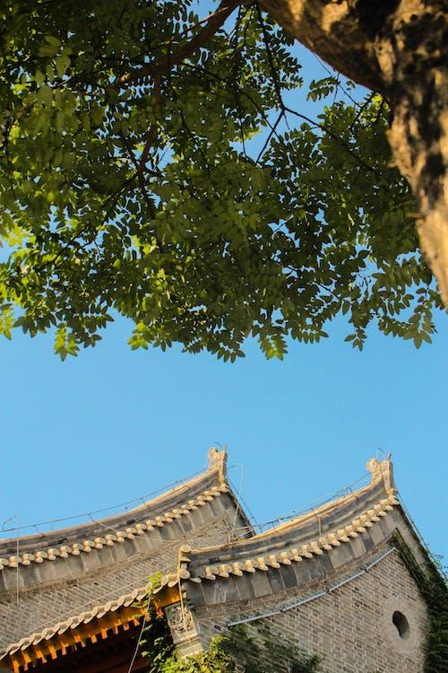 Δωρεάν στοκ φωτογραφιών με jingxing, shijiazhuang, Κίνα