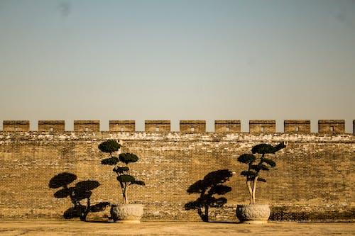 Δωρεάν στοκ φωτογραφιών με shijiazhuang, δέντρα, Κίνα