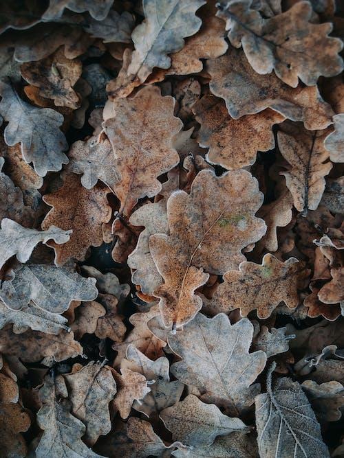 Fotos de stock gratuitas de ambiente, atmósfera, bosque