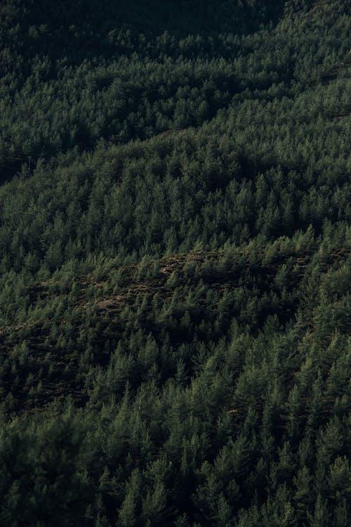Immagine gratuita di agricoltura, albero, collina