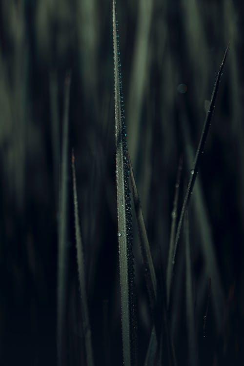 Immagine gratuita di alba, arte, astratto