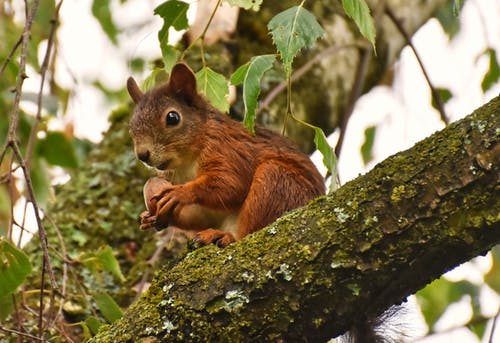 Základová fotografie zdarma na téma divočina, divoký, dřevo