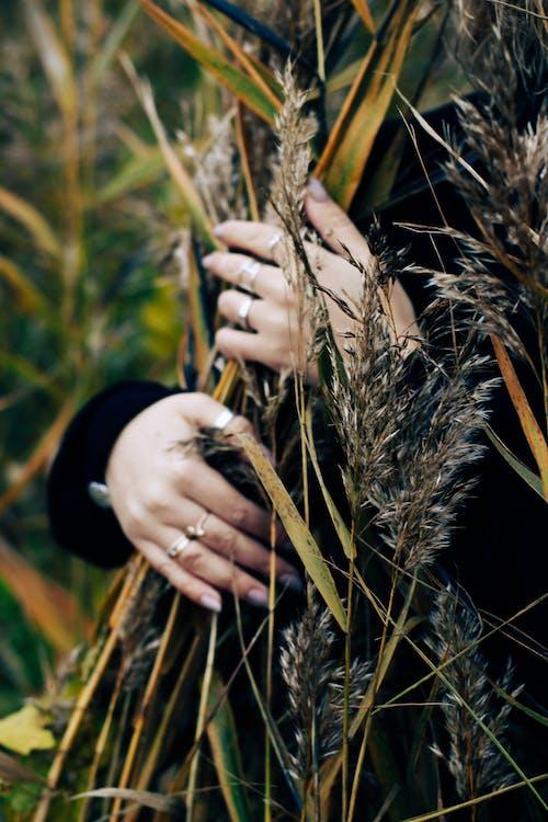 Hands Embracing Crops