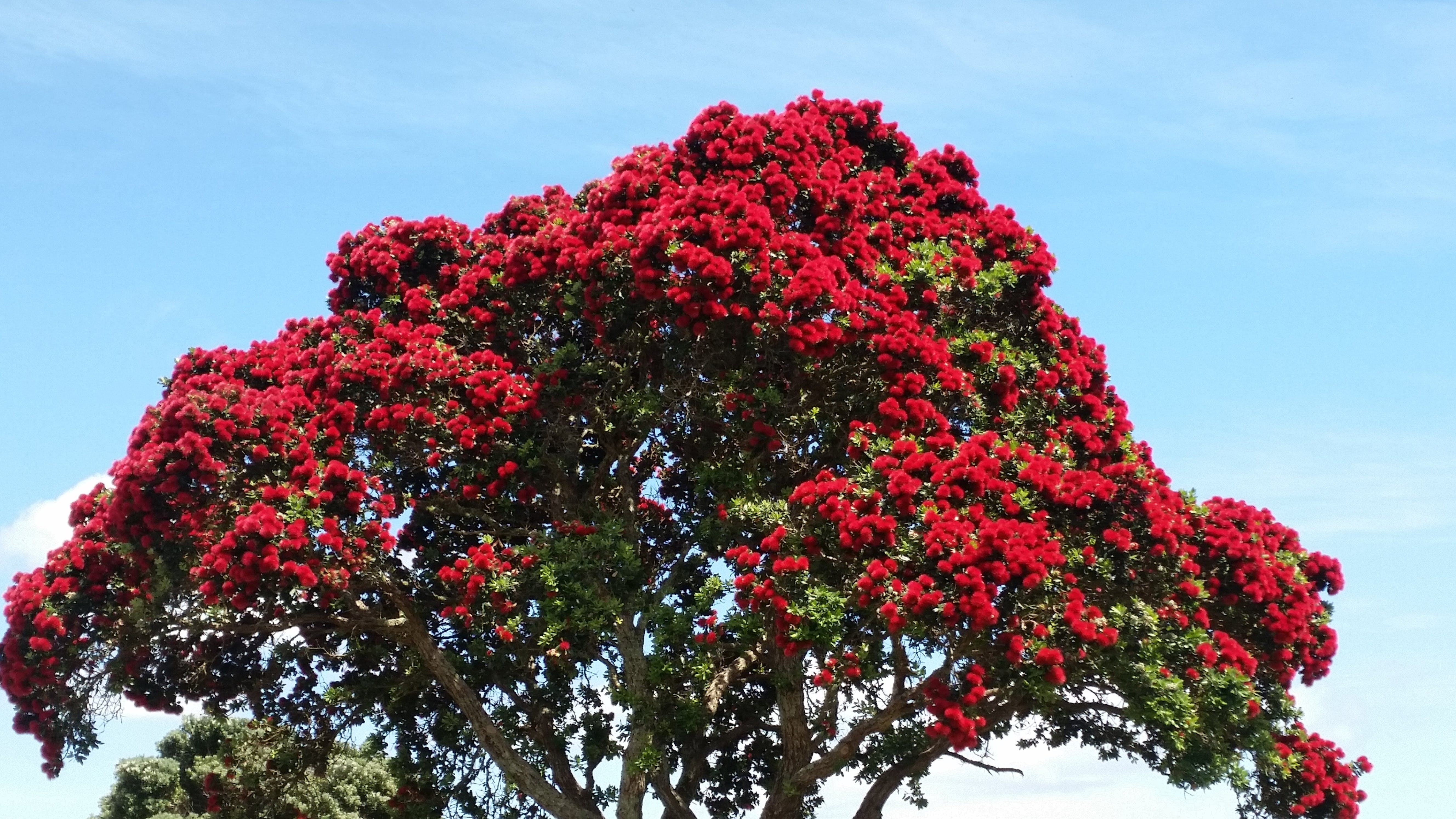 Red and Green Tree Under Blue Sky