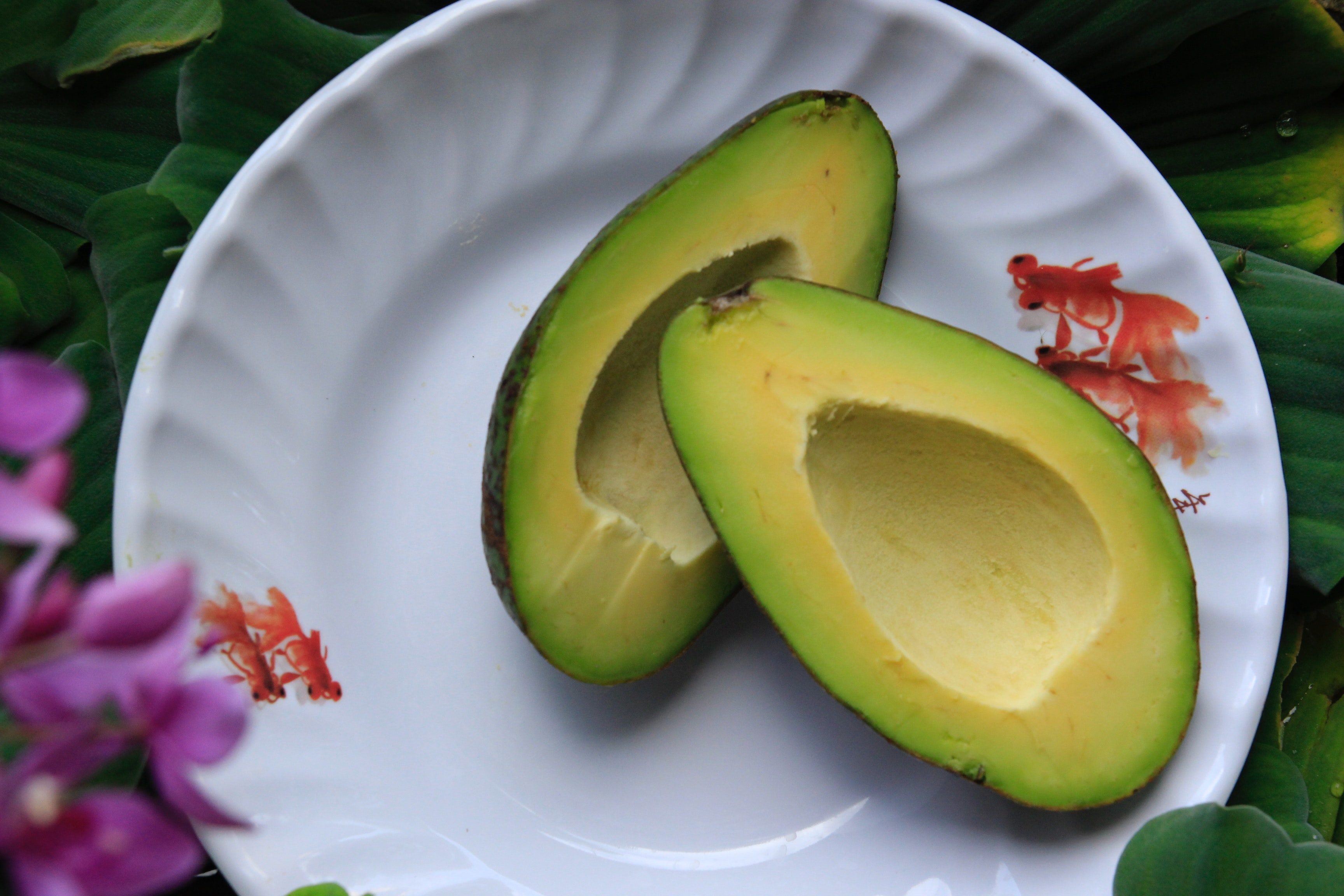 Avocado Fruits Images
