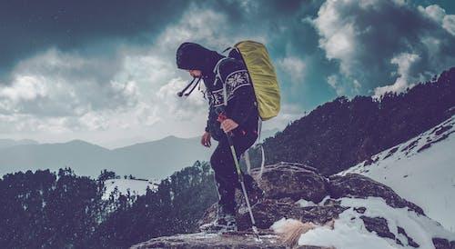 Photos gratuites de action, adulte, alpiniste, arbres