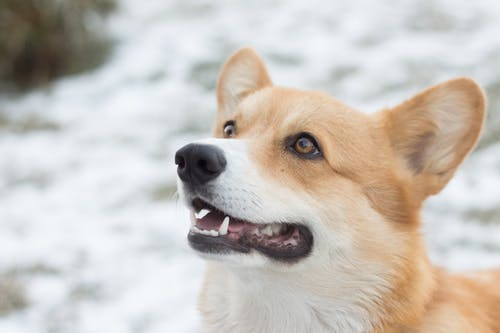 Gratis arkivbilde med bedårende, dyr, hund, huslig