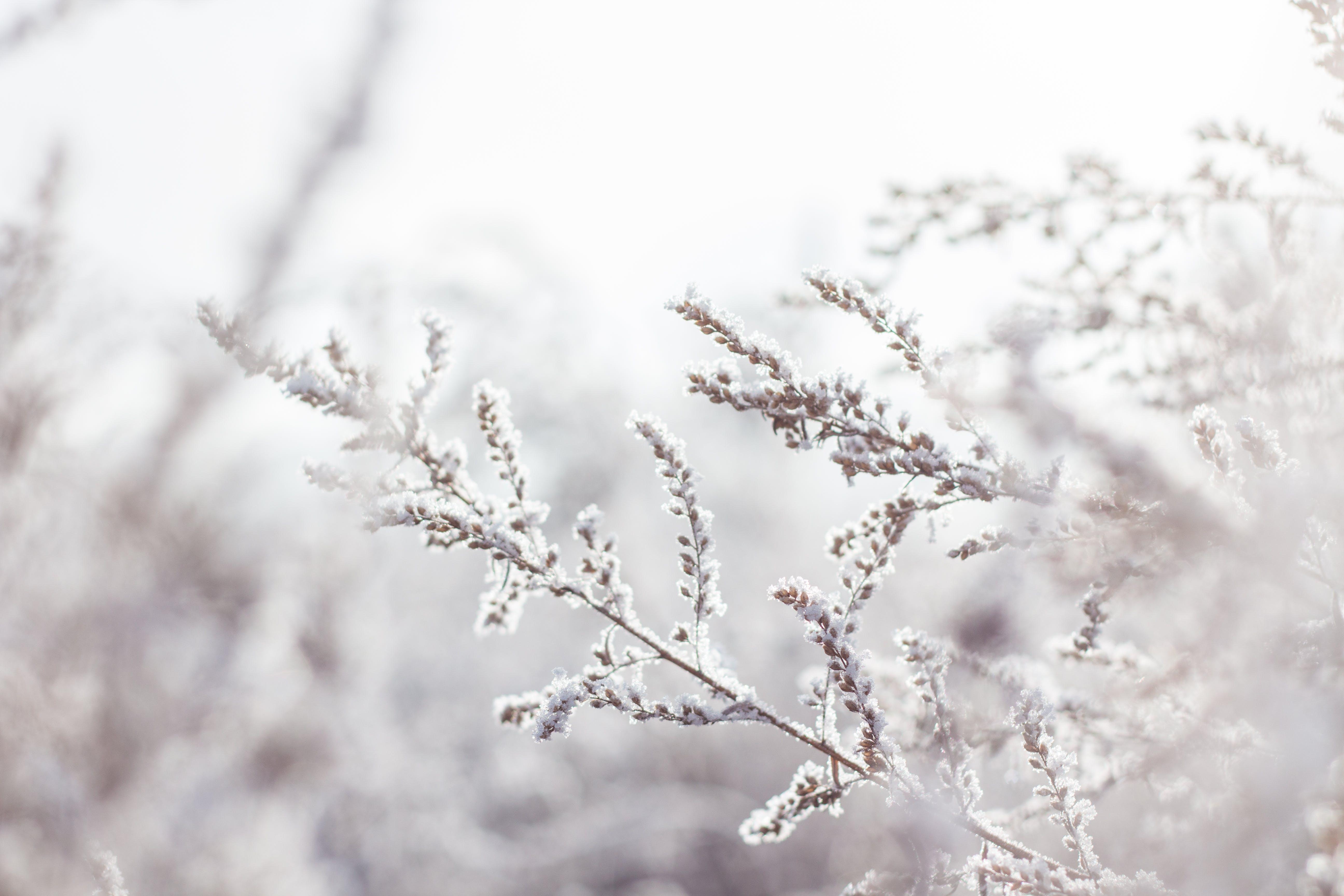 Foto stok gratis beku, bunga, ceri, cuaca
