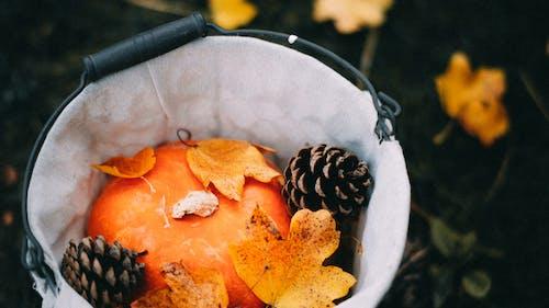 Orange and Black Fruit on White Ceramic Bowl