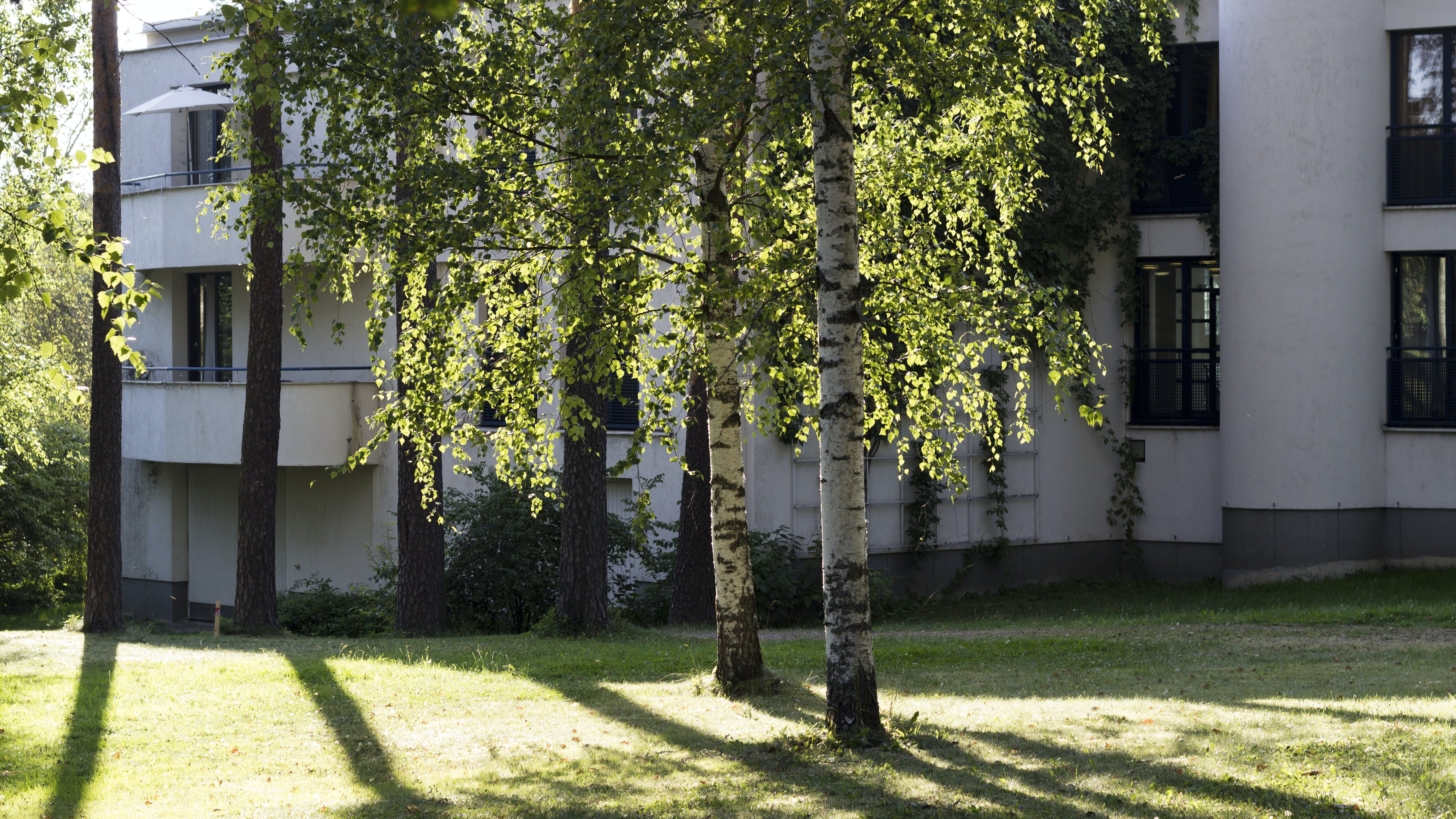 Birch Trees Beside the White Building