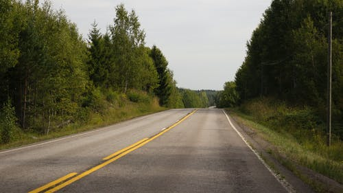 Asphalt Road Surrounded by Green Trees