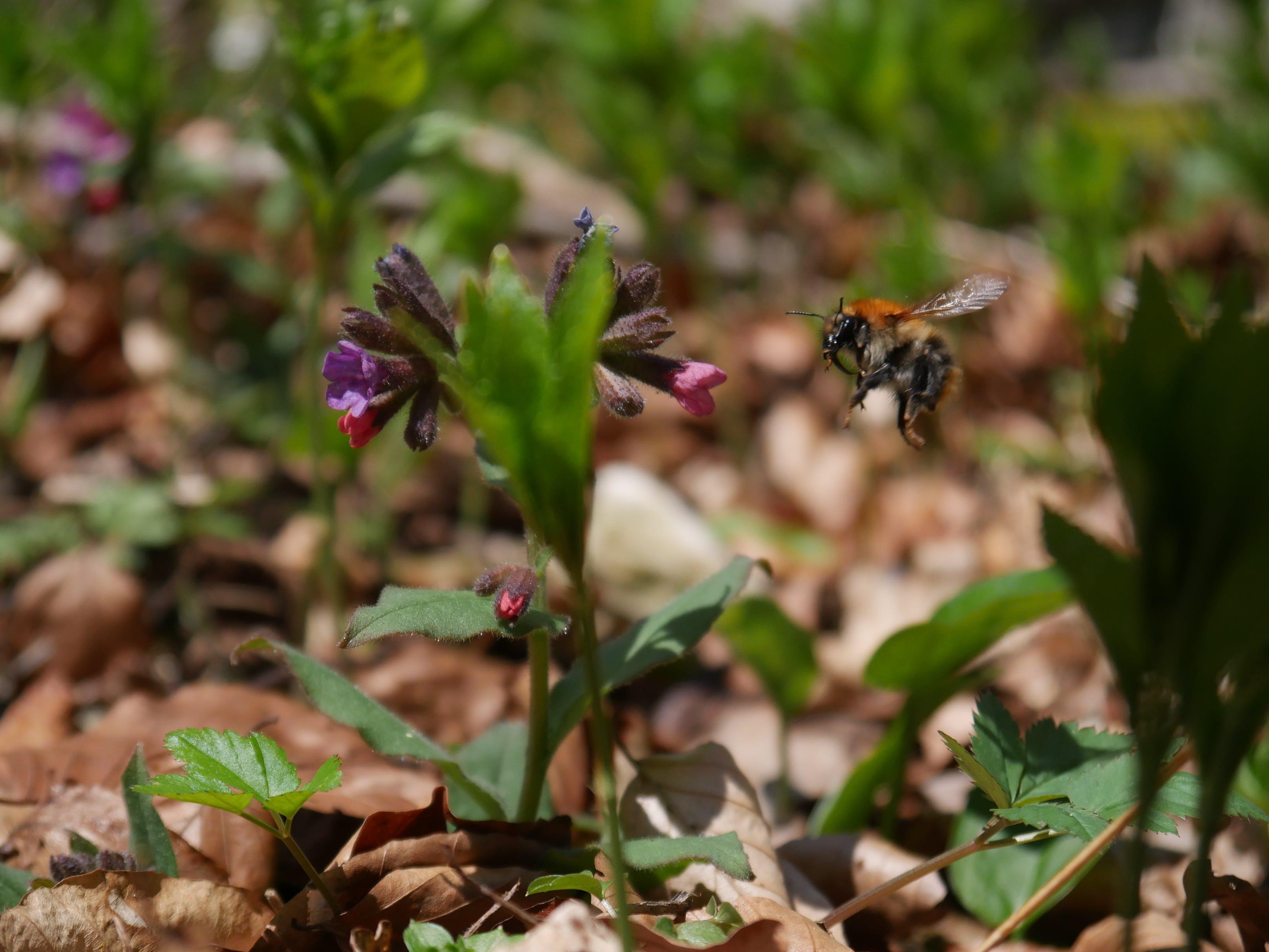 Free stock photo of flower, spring, wildlife