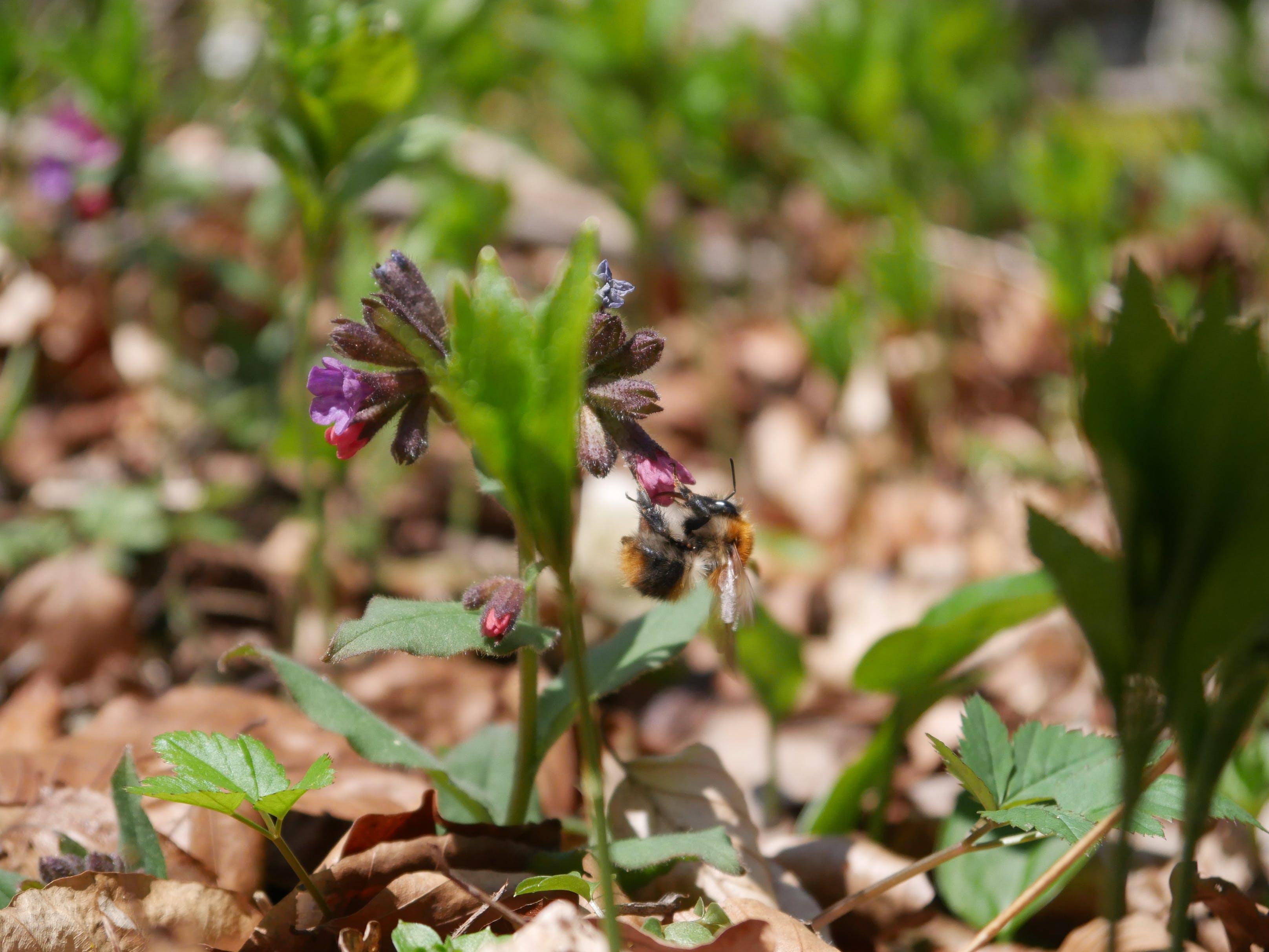 Free stock photo of flowe, pring, spring