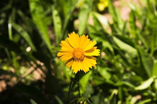 Gratis stockfoto met bloem, natuur