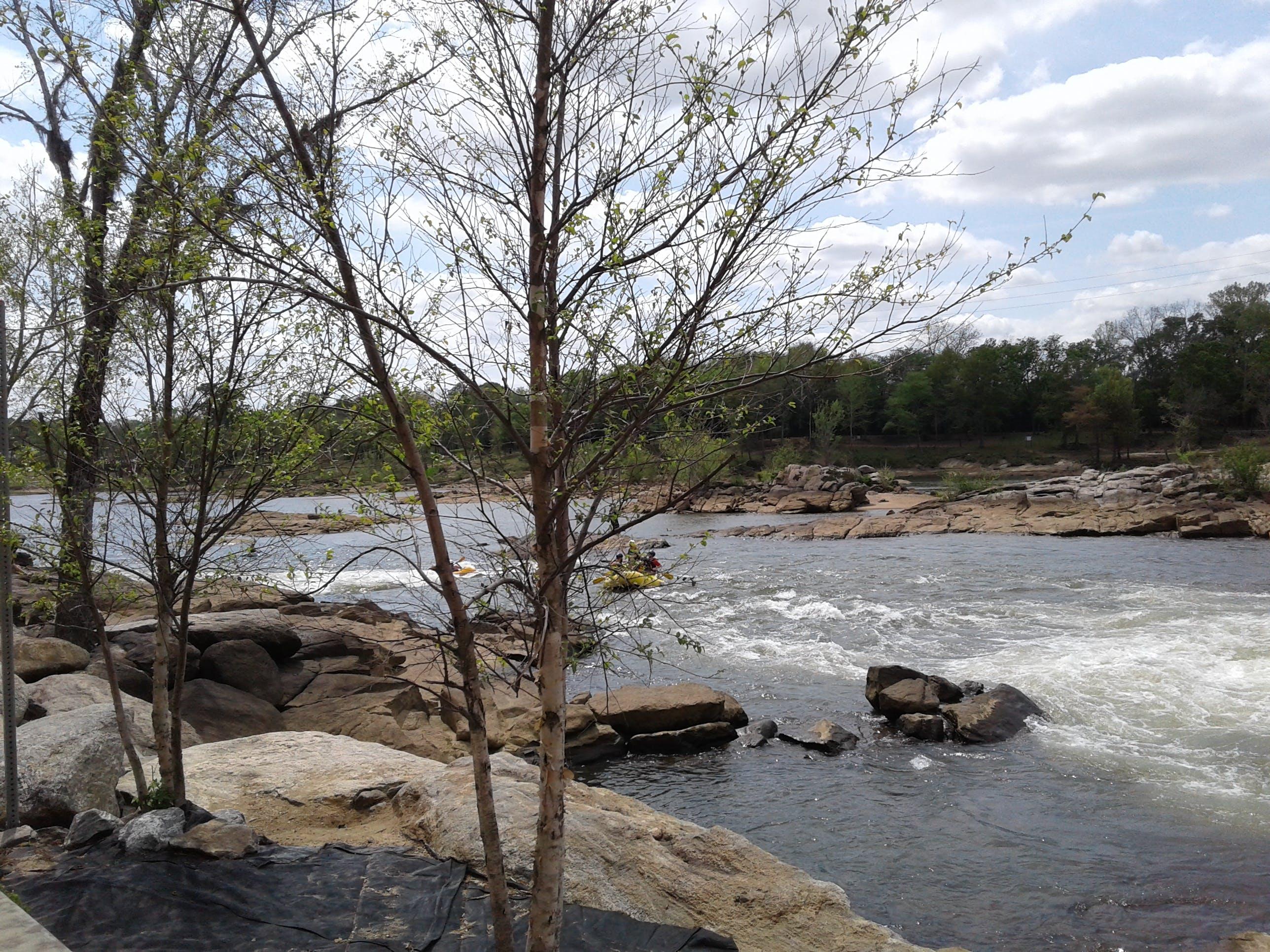 Foto d'estoc gratuïta de acomiadar-se, aigua, arbre, arbres