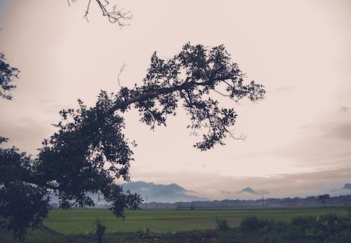 Fotos de stock gratuitas de árbol, paisaje, sephia