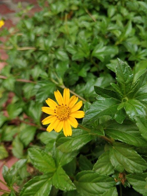 Fotobanka sbezplatnými fotkami na tému kvet, kvety, zelená, žltá