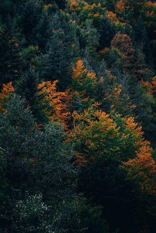 天性, 季節, 性質 的 免费素材图片