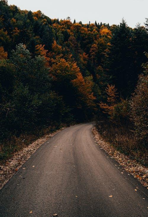 concreate, 创建道路, 季節 的 免费素材图片