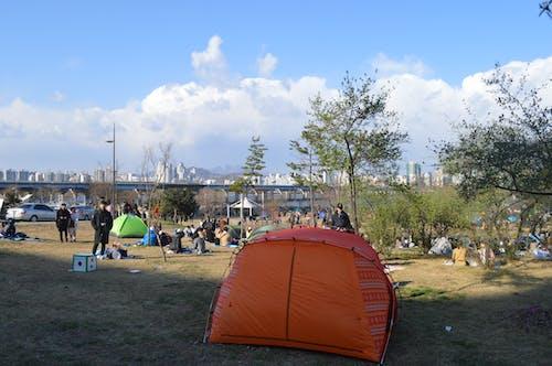 公園, 海和鳥, 漢江, 韓國生活 的 免費圖庫相片