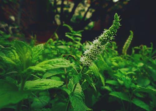Gratis arkivbilde med blomst, blomstre, grønn, hage