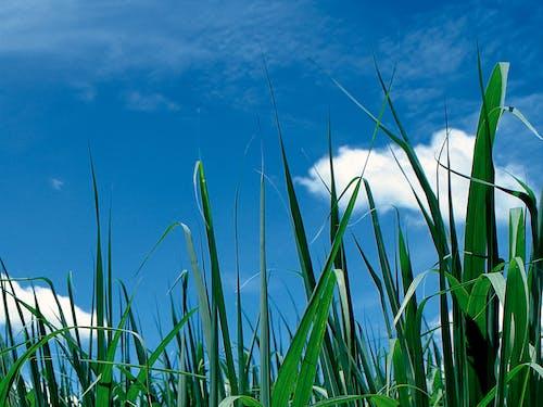 Foto profissional grátis de aumento, brilhante, campo de grama, close