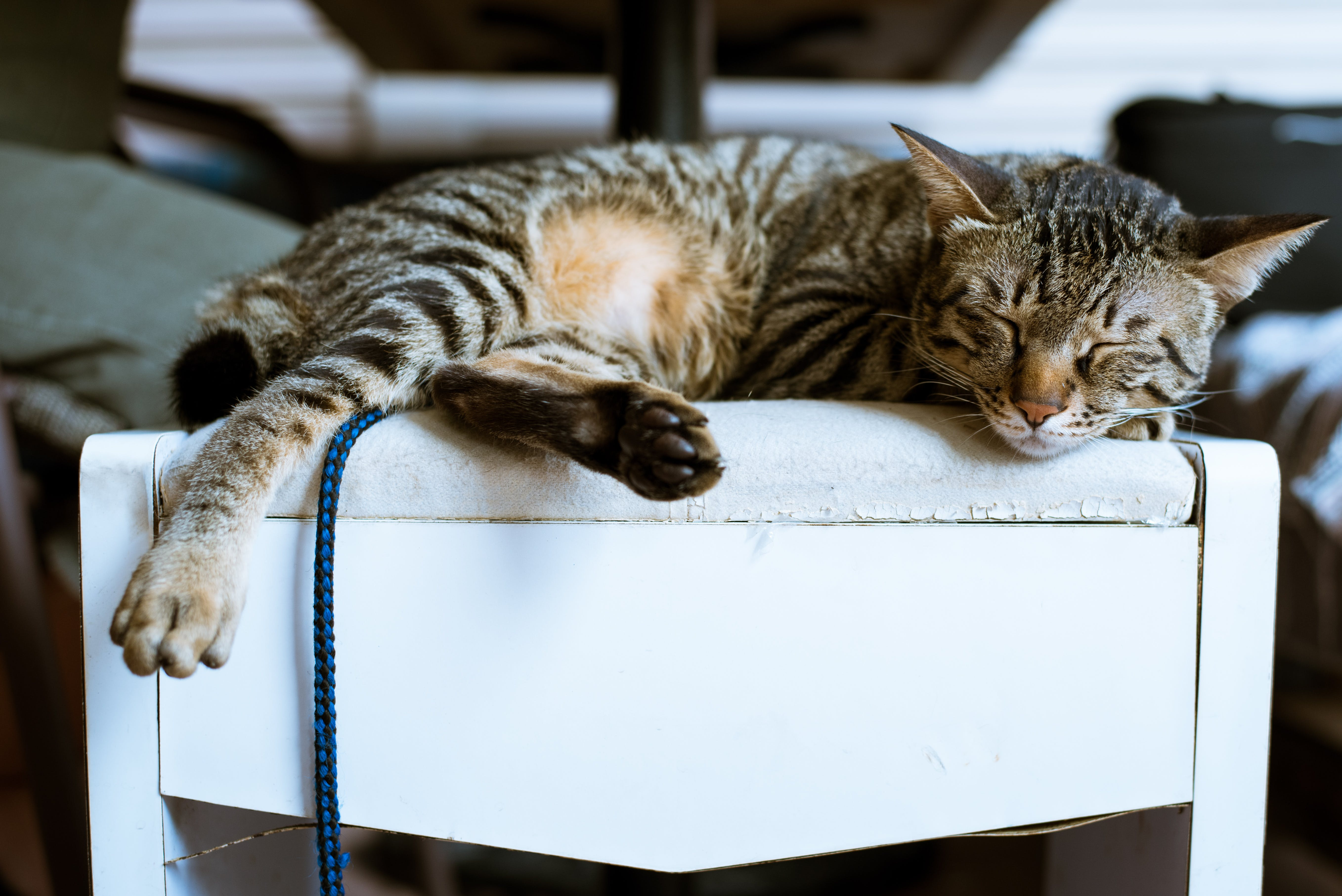 Brown Tabby Cat on White Wooden Furniture