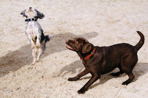 Immagine gratuita di adorabile, animali, animali domestici, cani