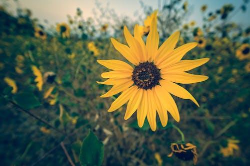 Darmowe zdjęcie z galerii z flora, jasny, jesień