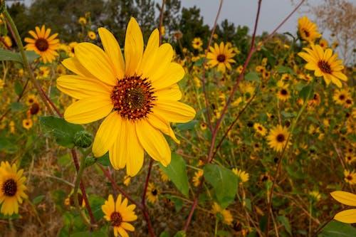 Darmowe zdjęcie z galerii z flora, jasny, kwiat