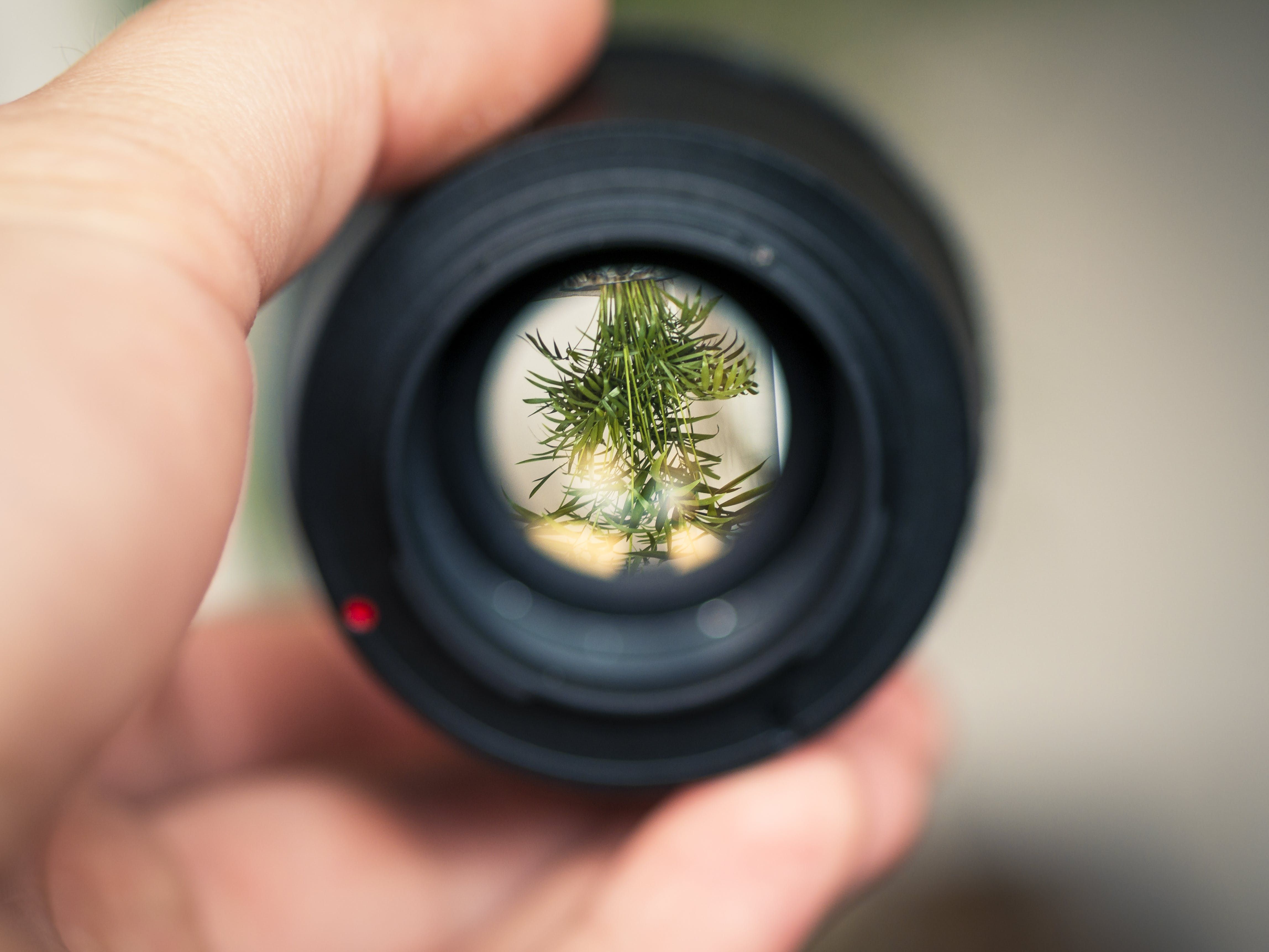 Person Holding Black Smartphone Camera Lens Capturing Green Plant in Selective Focus Photography