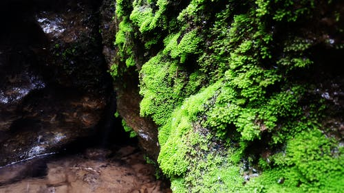 경치, 녹색, 돌, 락의 무료 스톡 사진
