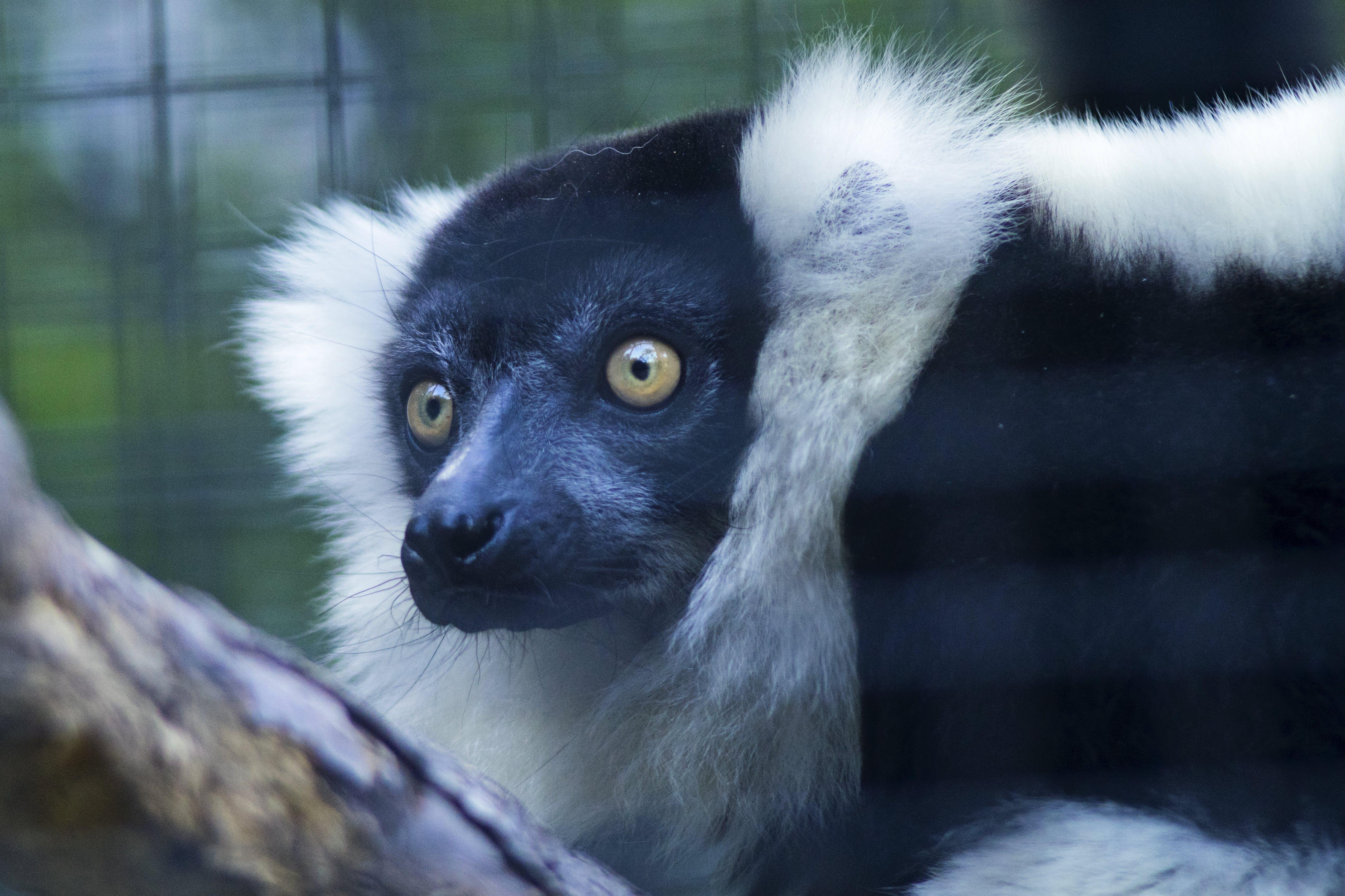 Foto profissional grátis de animais selvagens, animal, bonitinho, calma