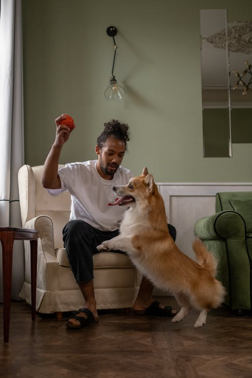 Man with Dog and holding Ball