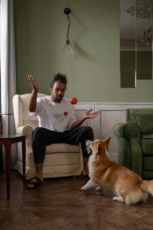 Dog Looking at Man Throwing Ball