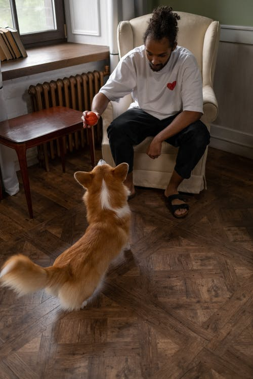 Man Holding Ball over Dogs Head