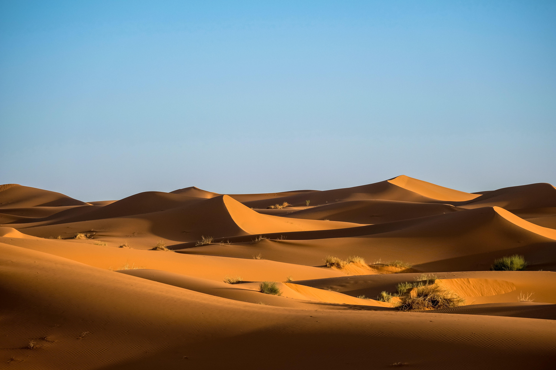Green Bushes on Desert