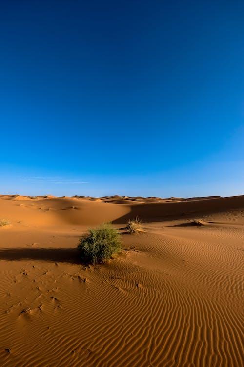 Ảnh lưu trữ miễn phí về bầu trời quang đãng, các đụn cát, cằn cỗi, cát