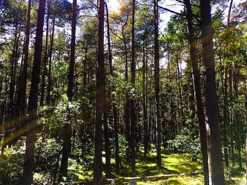 açık, ağaçlar, büyüme, çevre içeren Ücretsiz stok fotoğraf