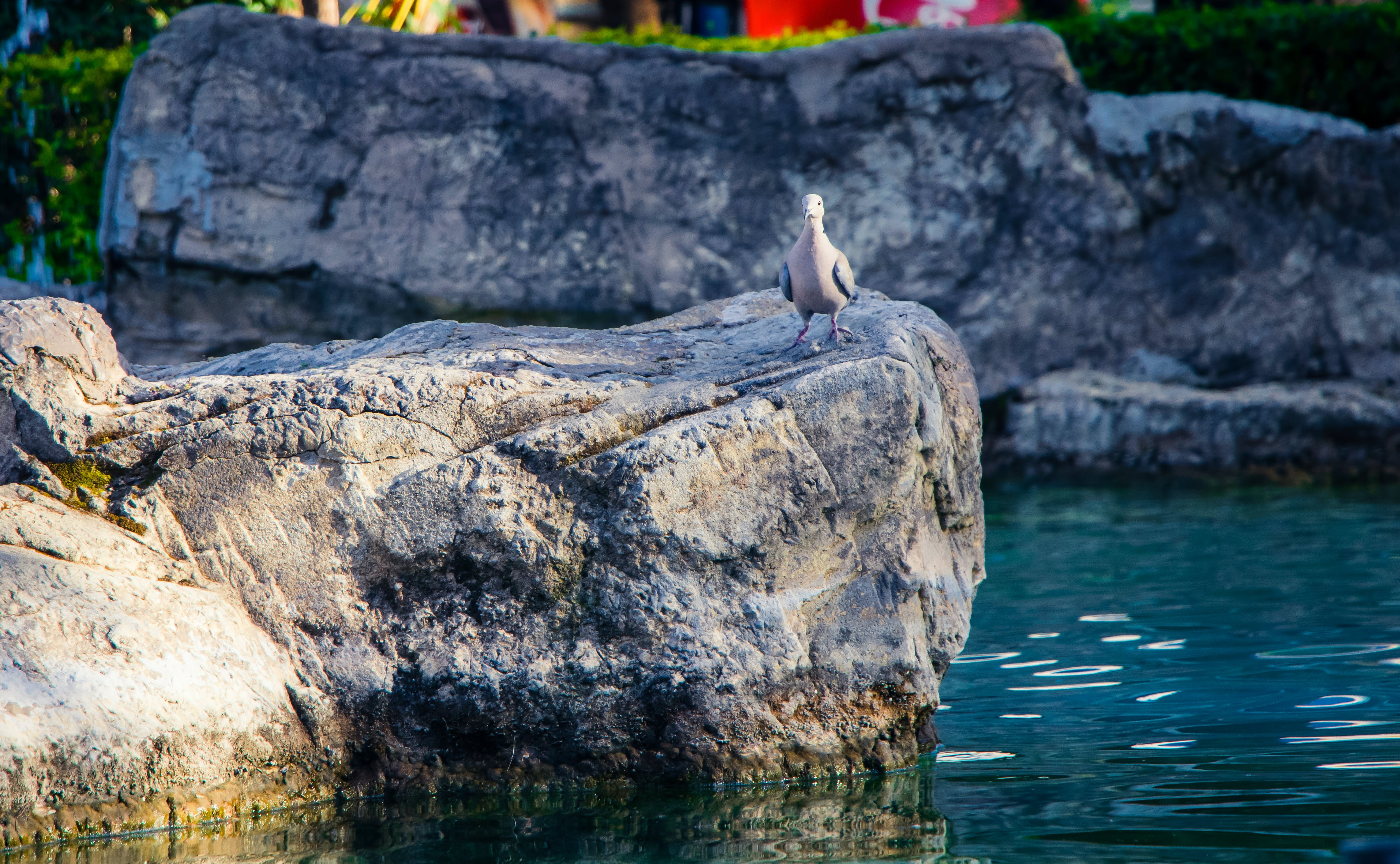 Photo of Gray Bird Perch on Gray Stone Beside Body of Water