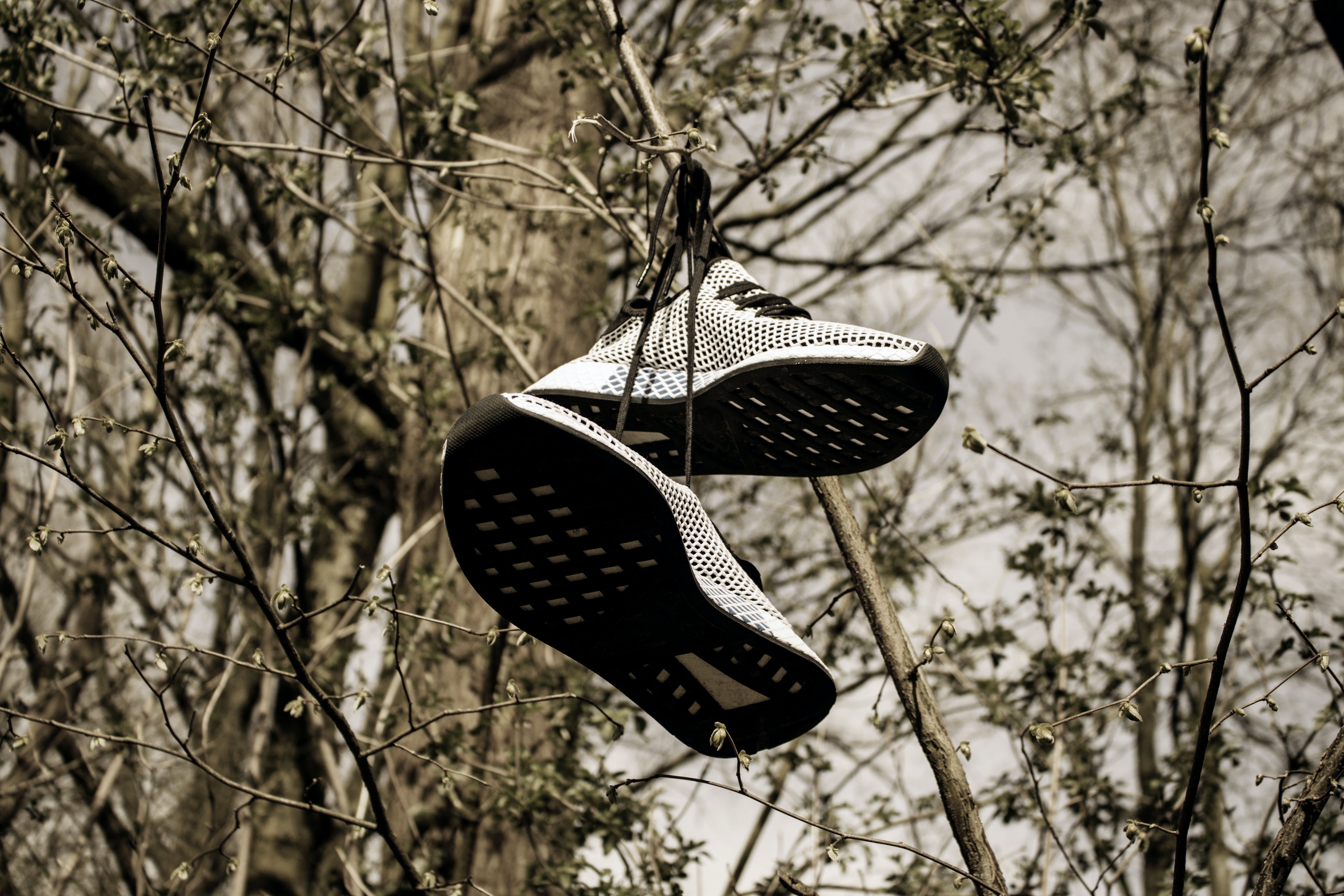 Pair of Grey Low-top Sneakers Hanged on Tree